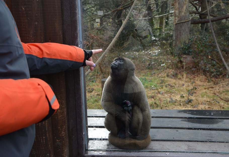 Octagon Theatre Donates Rope To Monkey World